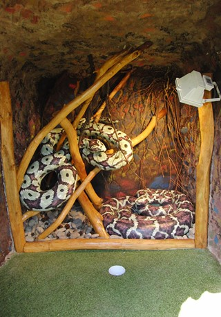 Snakes inside a cave at the golf course
